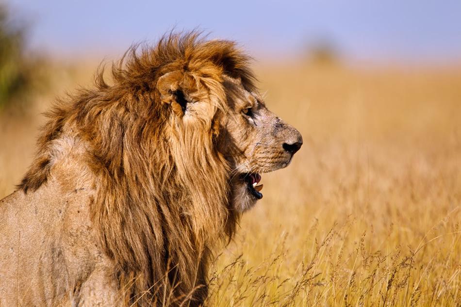 O que a morte de um leão pode ensinar sobre a reputação de um consultório?